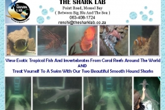The Shark Lab Mossel Bay